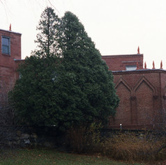 13 Topiary Trees