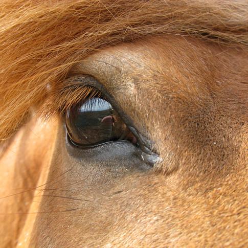 Horse Eye 3