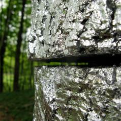 Columnar Reflection