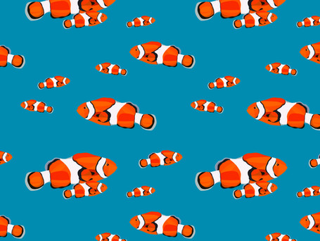 A Circus of Clownfish