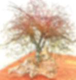 SK Autumn Oak.jpg