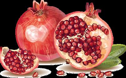 pomegrante.png