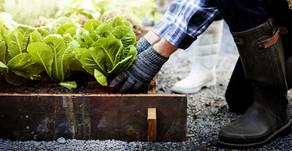 Gardening Tips & Trick