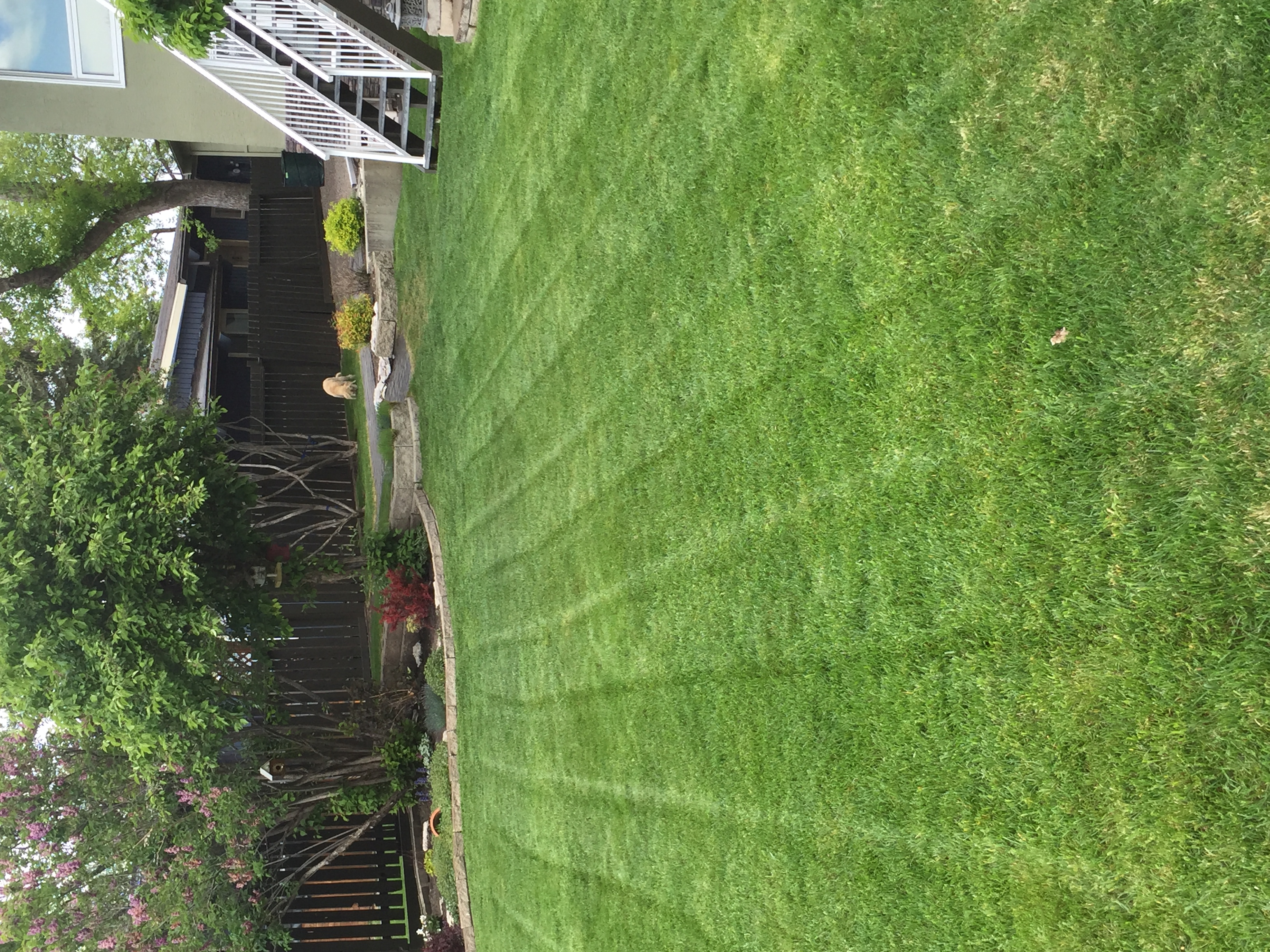 Residential lawn maintenance