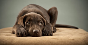 The Subtle Signs Your Pet Wants You to Know