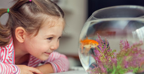 FISH AS PETS – A COLORFUL EXPERIENCE