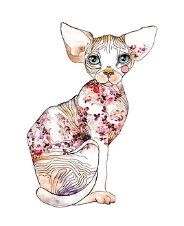 kisspng-sphynx-cat-siamese-cat-kitten-dr