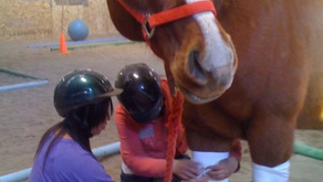 How a Horse Can Help