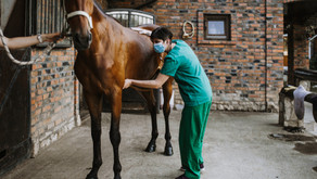 Equine Emergencies - Could it Happen to You?