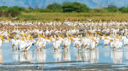 Birds near Maasai Giraffe Eco Lodge, Lake Natron, Tanzania