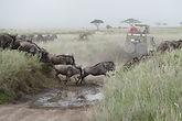 Safari Tanzania Maasai Giraffe