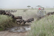 safari, gnou, serengeti, Natron