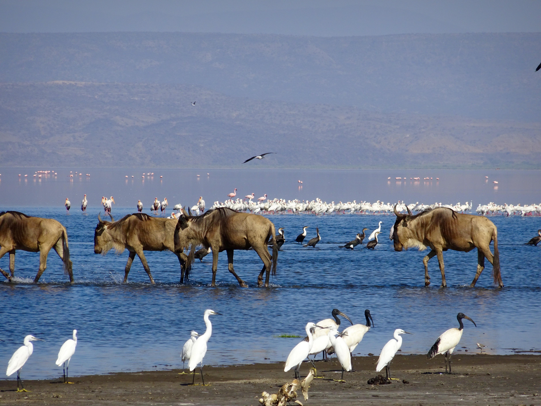 Lake Natron, Tanzania, Maasai