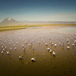 Lake Natron, Massai Giraffe Eco Lodge, Tanzanie, Flamingo