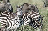 ngorongoro, Natron, serengeti,safari