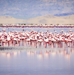 Tanzanie maasai, Lac Natron maasai, Voyage insolite, massais,  eco équitable, safari, nature, paysage, culture maasai,savane, visitnative