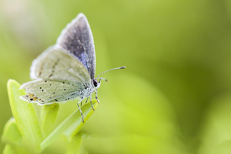 butterfly-5131967_1920_edited.jpg