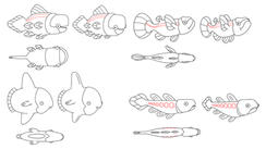 """Fish Designs for """"The Fungies!"""""""