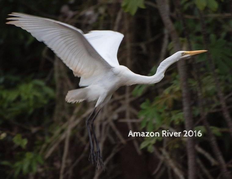 Amazon River 2016