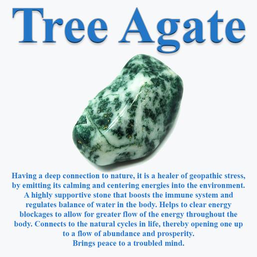 TreeAgateInfo.jpg