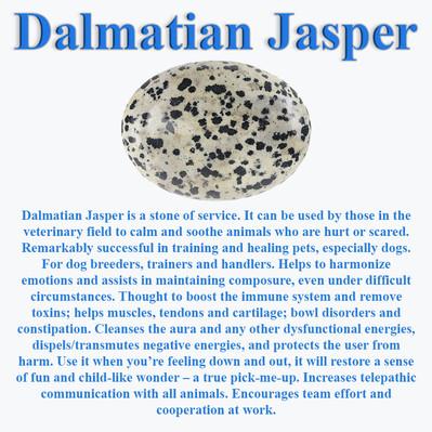 DalmatianJasperInfo.jpg