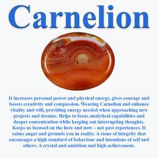 CarnelionInfo.jpg