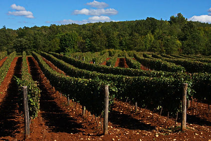 Private gastro & wine toures