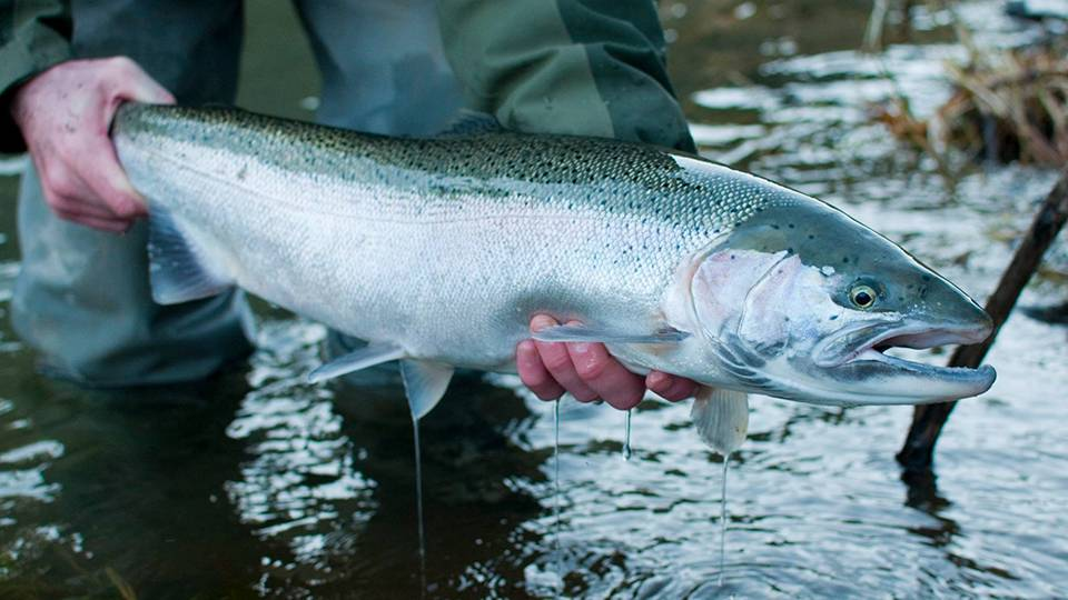 video-episode_steelhead