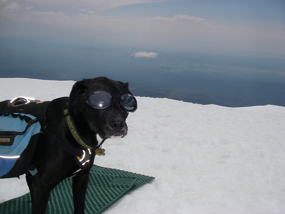 Karluk on top of Mt Adams