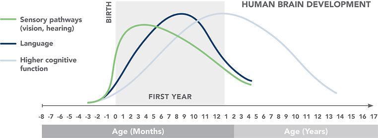 Human_Brain_Graph.jpg