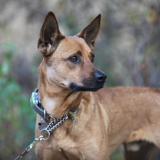 Meet Red Dog: one of the MMCo Mutts
