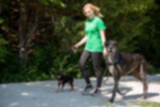 Manhattan, KS professional dog walker with miniature pinscher and great dane.