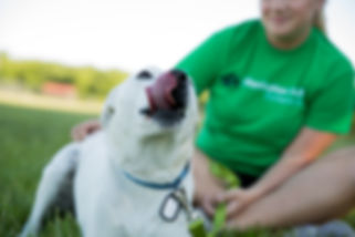Manhattan, KS professional pet sitter - insured and bonded