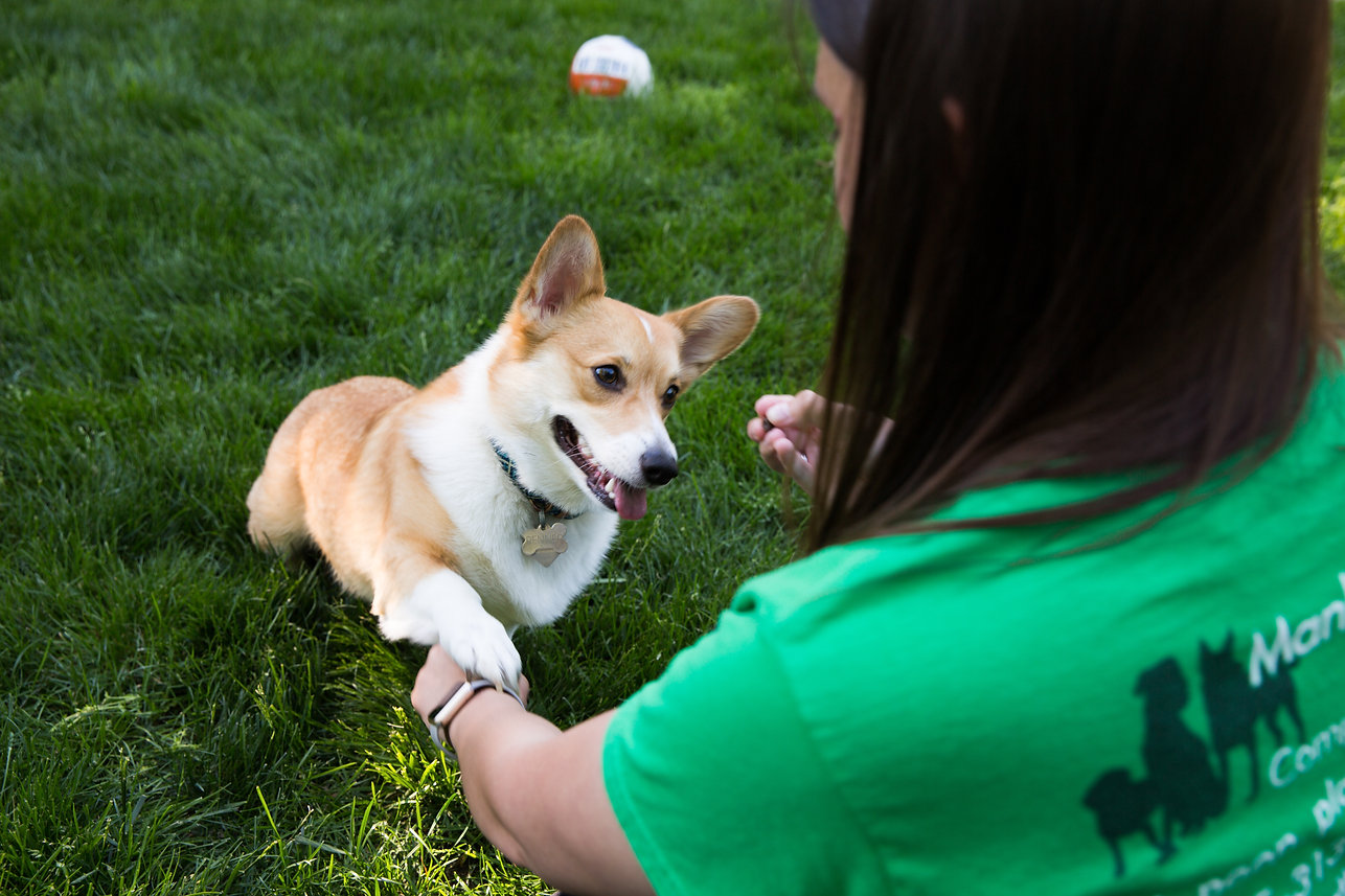 Manhattan KS Professional Pet Sitter - Corgi