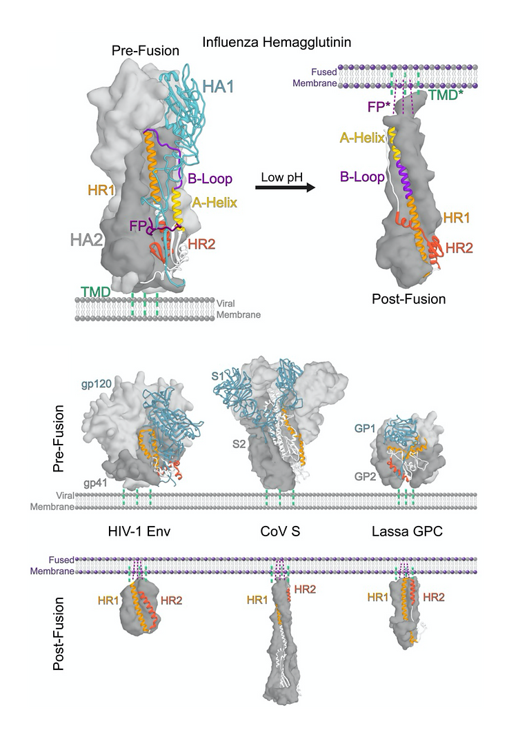 FusionProteins_Gallery_small_edited.png