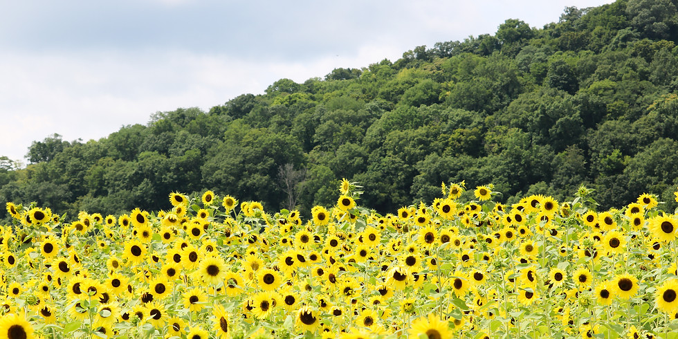*POP-UP* Sunflower Trail Excursion - Tickets for Sale at the Door!