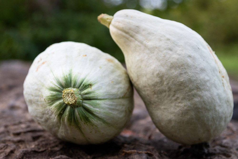 Blue Hubbard Squash Green Door Gourmet