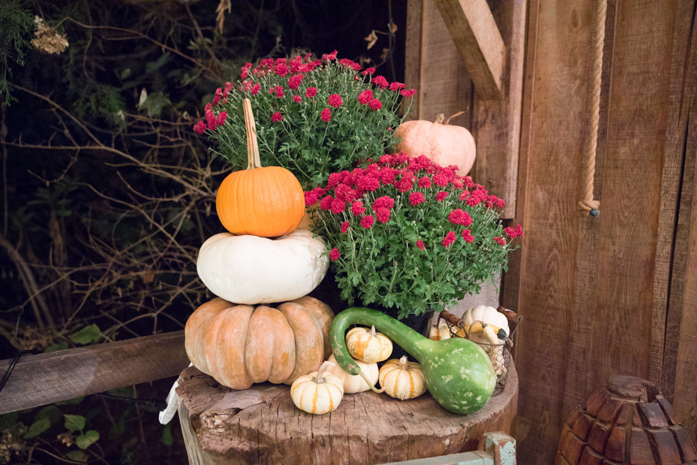 Green Door Gourmet Pumpkins