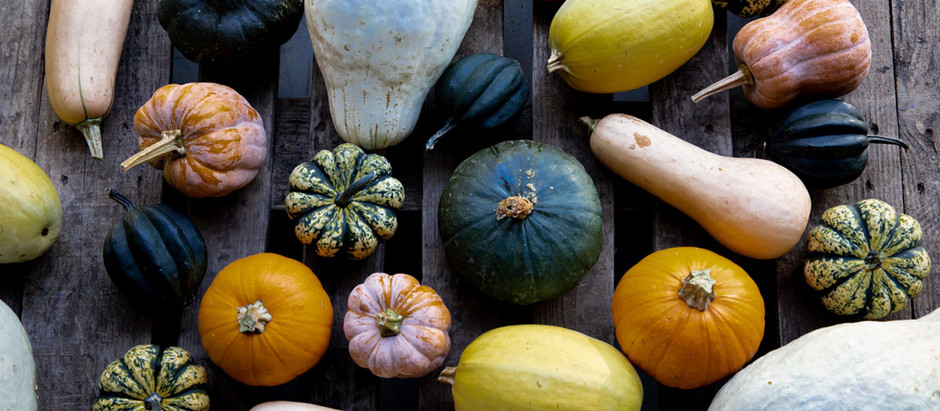 Fall for Winter Squash this Season