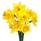 daffodils image.jpg