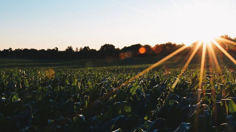 Sunset in Fields New_edited.jpg