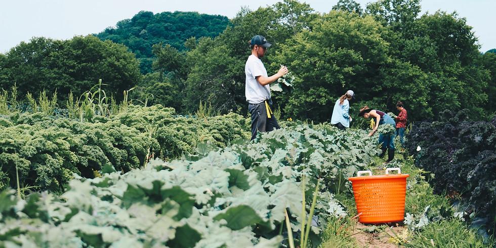 Local Farm Box - Pickup Saturday 9/8 OR Sunday 9/9