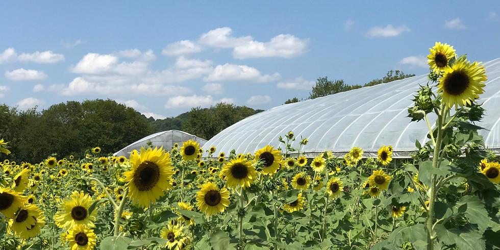 FREE Sunflower Maze