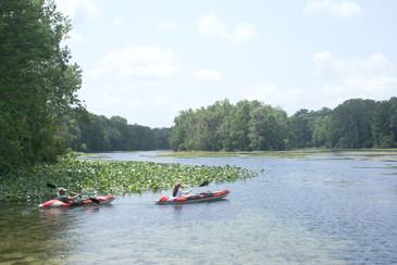 kayaks-on-the-wacissa-river.jpg