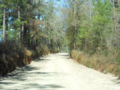 West-Lake-Road-Jefferson-Florida.jpg