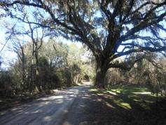 Gum-Swamp-Road-Jefferson-County.jpg