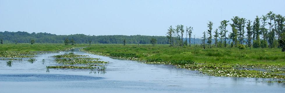 Lake-Miccosuki-North-Florida.jpg