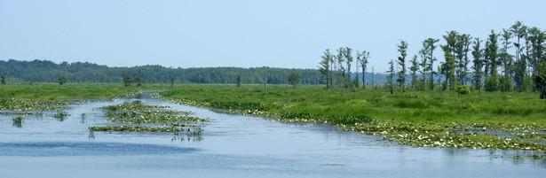 Lake-Miccosuki-Jefferson-County-Florida.