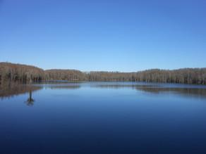 Aucilla-River-Lake.jpg