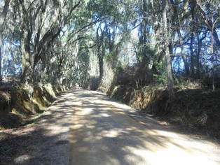 Gum-Swamp-Road.jpg